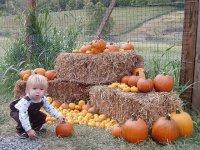 Mały chłopczyk z dyniami