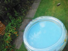 basenik dmuchany dla dzieci